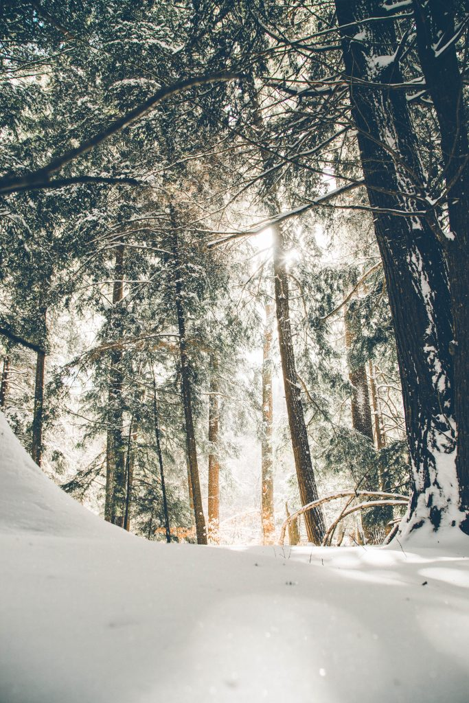 ropa de esquí de lujo